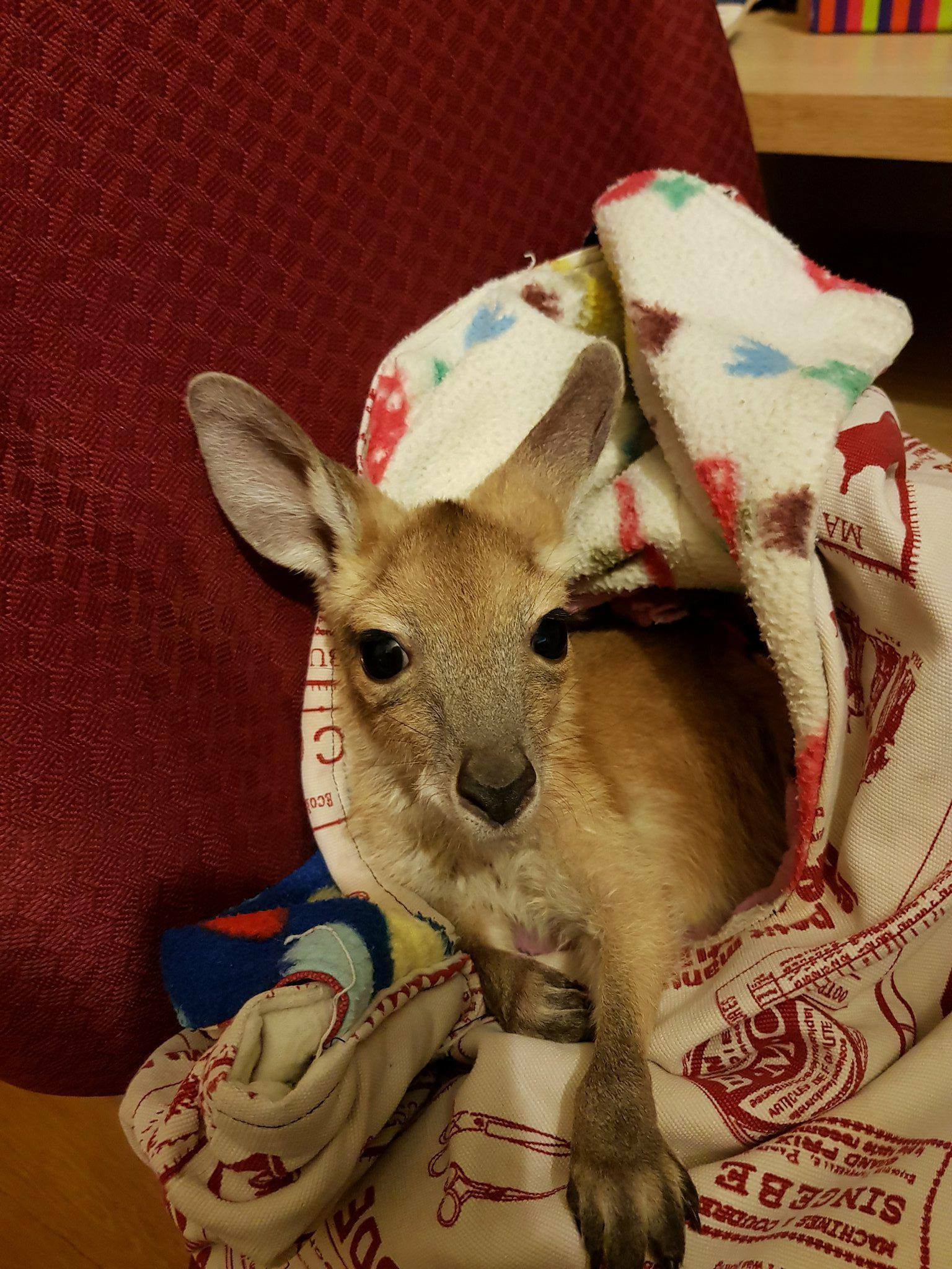 Joey in pouch